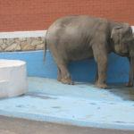 zoo_ekaterinburg1