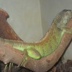 zoo_ekaterinburg2