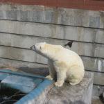 zoo_ekaterinburg3