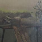 zoo_ekaterinburg5